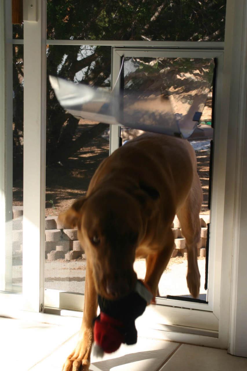 Hale Screen Pet Door Pet Door Store