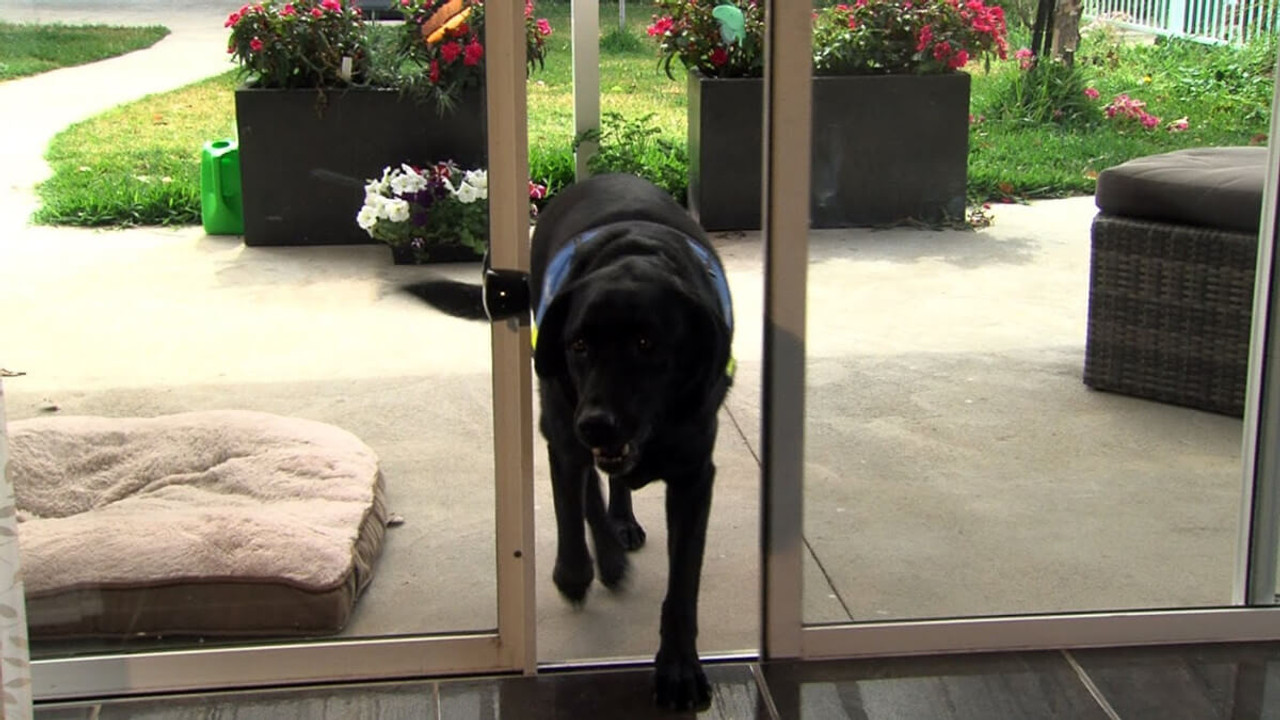 Autoslide automatic sliding glass door openers open the door for you and your pets