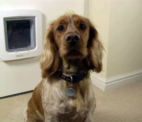 SureFlap collar keys are about the size of a quarter and contain an RFID chip which will operate all SureFlap pet doors