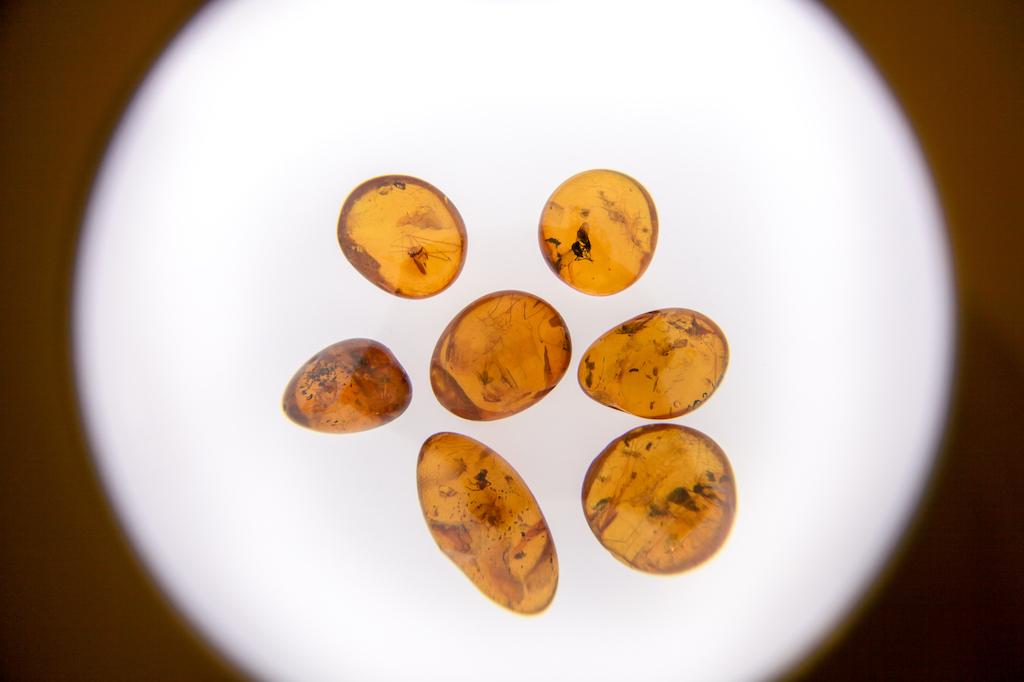 amber-museum-pics-1.1.jpg