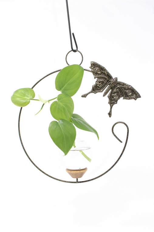 Swallowtail Crescent Hanging Plant Rooter Vase With Plant