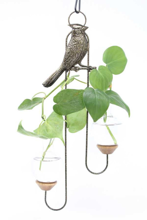 Cardinal Double Hanging Plant Rooter Vase with wandering plant