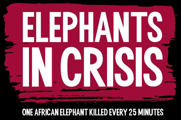 Elephants In Crisis
