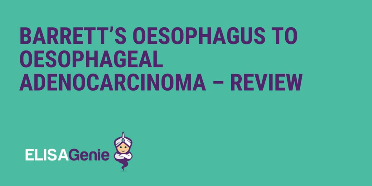 Barrett's Oesophagus to Oesophageal Adenocarcinoma – Review