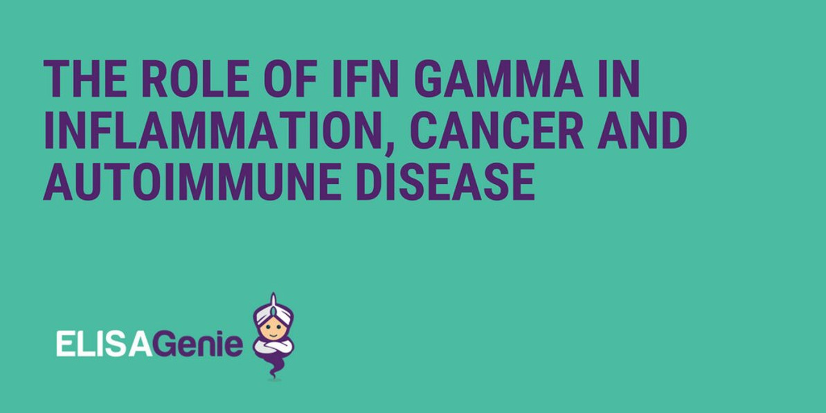 The role of IFN gamma in inflammation, cancer and autoimmune disease