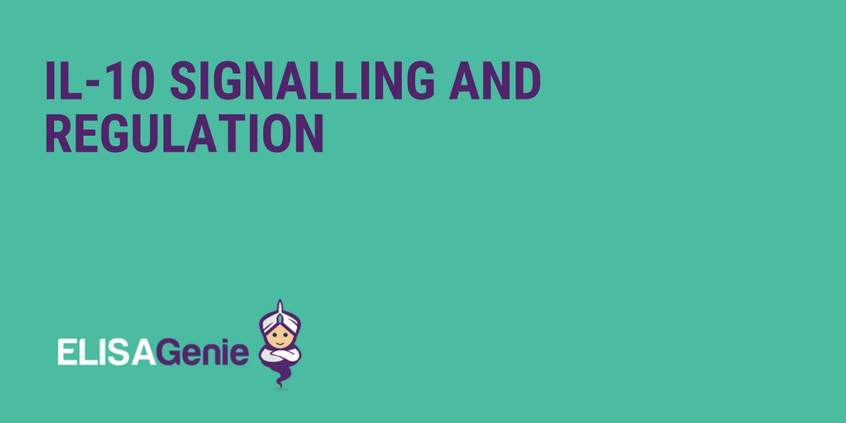 IL-10 signalling and regulation