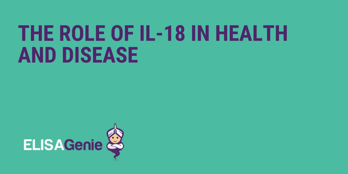 The role of IL-18 in health and disease