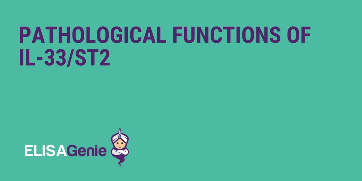 Pathological functions of IL-33/ST2