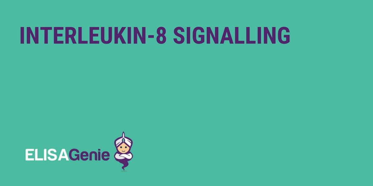Interleukin-8 signalling