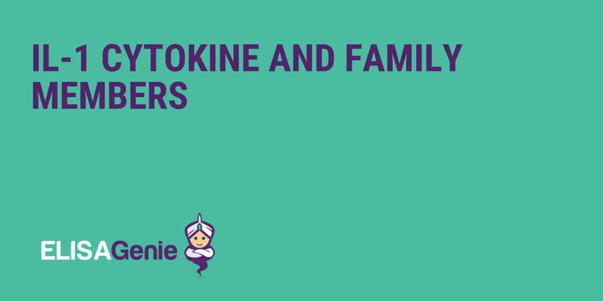 IL-1 Cytokine and Family Members