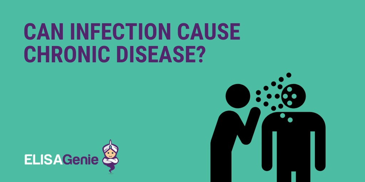 Can infection cause chronic disease?