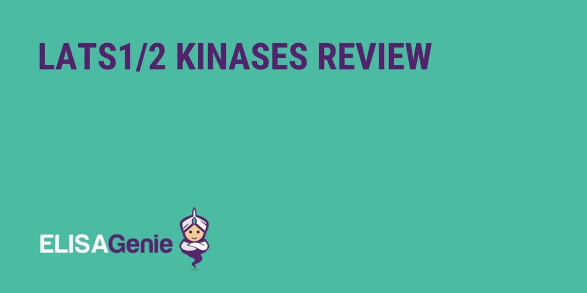 LATS1/2 Kinases Review
