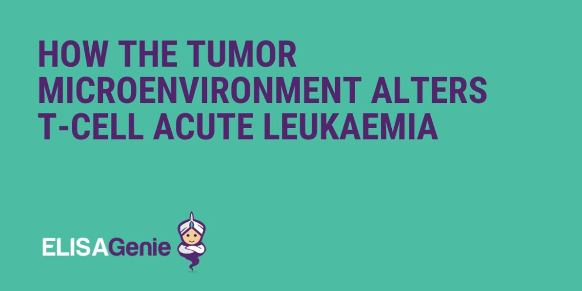 How the tumor microenvironment alters T-cell acute leukaemia