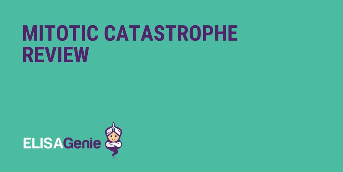 Mitotic Catastrophe Review