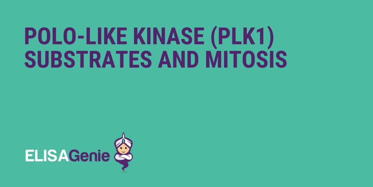 Polo-like kinase (Plk1) substrates and mitosis