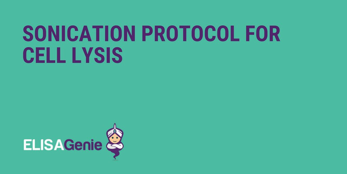 Sonication protocol for cell lysis