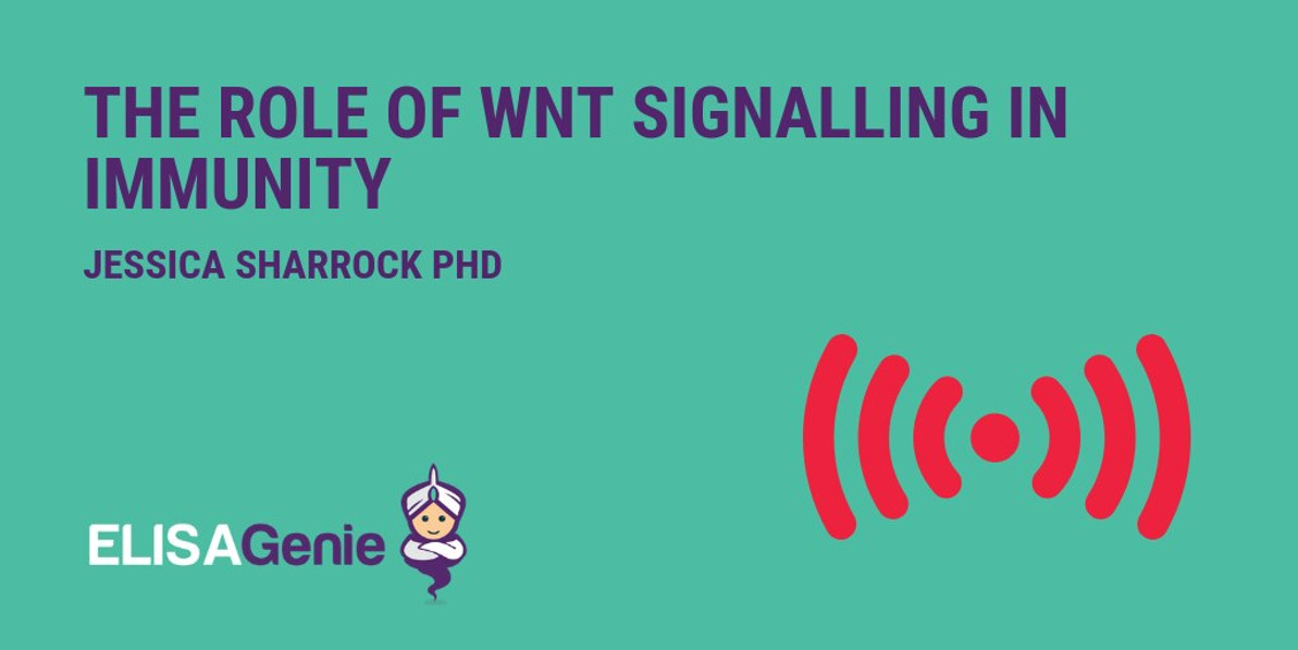 Wnt Signalling Pathway in Immunity