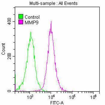 Anti-MMP9 Antibody RACO0183