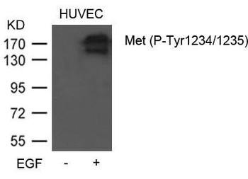 Phospho-MET Tyr1234/1235 Antibody PACO23918