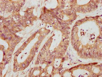 Mmp3 Antibody PACO33840