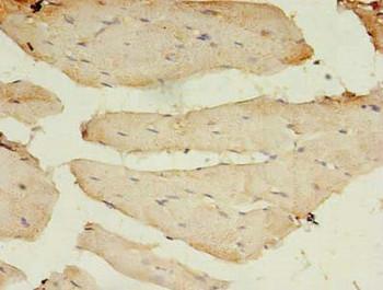 BTN2A1 Antibody PACO36994