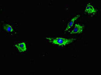 RYR2 Antibody PACO46402
