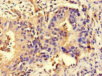 NLRP3 Antibody PACO47574