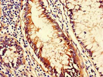 CD151 Antibody PACO48270