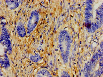 ERAL1 Antibody PACO48894