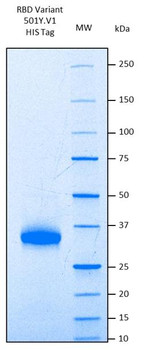 Recombinant Human SARS-CoV-2 Spike RBD Variant 501YV1, Lineage B.1.1.7, UK HEK