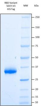 Recombinant Human SARS-CoV-2 Spike RBD Variant 501YV3, Lineage B.1.1.248, Brazil and Japan HEK