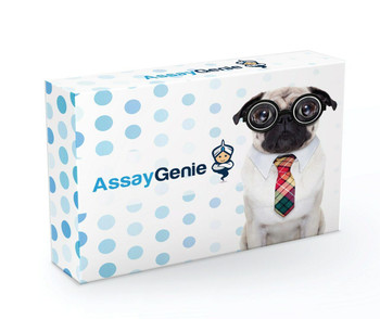 Canine CCL2 MCP-1 DIY ELISA Kit