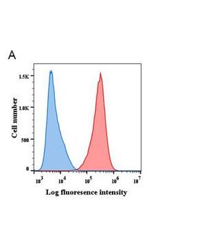 Anti-BCMA antibody DM6 Rabbit mAb HDAB0004