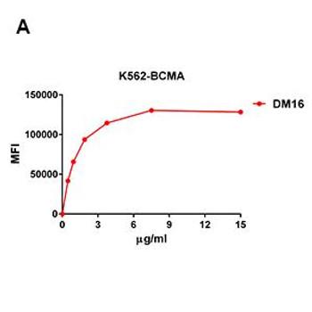 Anti-BCMA antibody DM16 Rabbit mAb HDAB0016