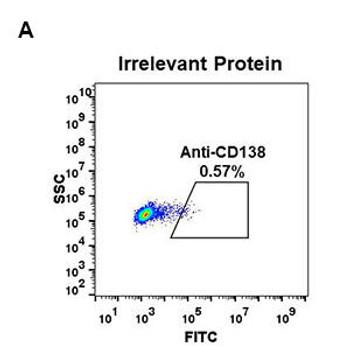 Anti-CD138 antibody DM56 Rabbit mAb HDAB0046
