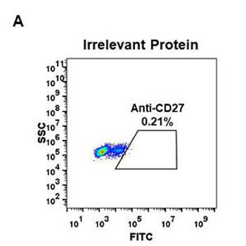 Anti-CD27 antibody DM58 Rabbit mAb HDAB0048