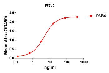 Anti-B7-2 antibody DM84 Rabbit mAb HDAB0071