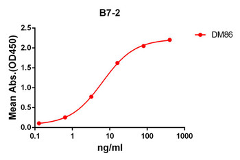 Anti-B7-2 antibody DM86 Rabbit mAb HDAB0073