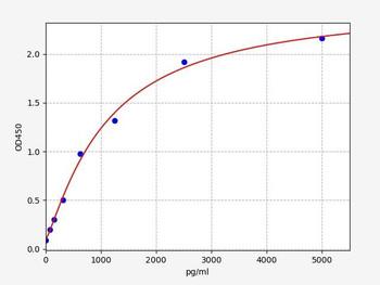 Rat Signaling ELISA Kits 5 Rat ATG5 autophagy protein 5 ELISA Kit RTFI01413