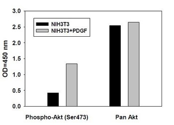 Human/Mouse/Rat Phospho-AKT S473 and Total Akt PharmaGenie ELISA Kit SBRS1745