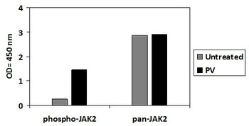 Human Phospho-JAK2 Y1007/1008 and Total JAK2 PharmaGenie ELISA Kit SBRS1871