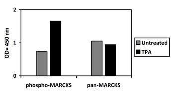 Phospho-ERK/JNK/P38 alpha PharmaGenie ELISA Kit SBRS1886
