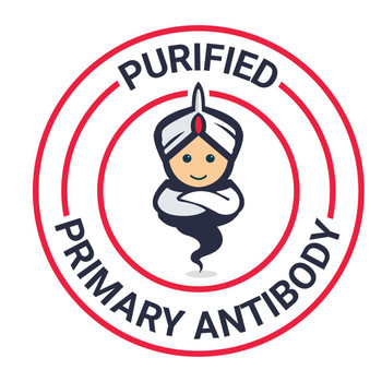 Purified Human CD19 Monoclonal Antibody 4G7AGEL1591