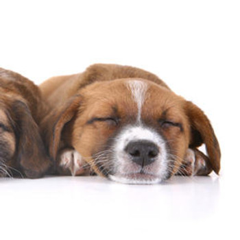 Canine ELISA Kits Dog Glucagon GCG ELISA Kit