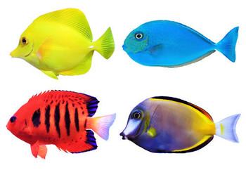 Fish ELISA Kits Fish Progonadoliberin-1 GNRH1 ELISA Kit