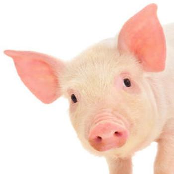 Porcine ELISA Kits Porcine Aminopeptidase N ANPEP ELISA Kit