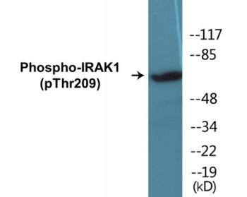 IRAK1 Phospho-Thr209 Colorimetric Cell-Based ELISA Kit