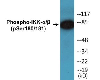 IKK-alpha/beta Phospho-Ser180/181 Colorimetric Cell-Based ELISA Kit