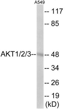 Cell Death AKT1/2/3 Colorimetric Cell-Based ELISA