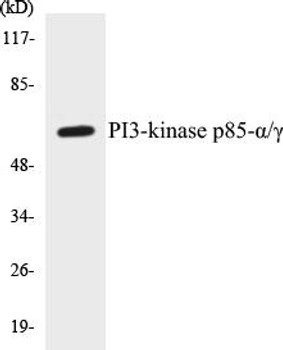 Immunology PI3-kinase p85-alpha/gamma Colorimetric Cell-Based ELISA Kit